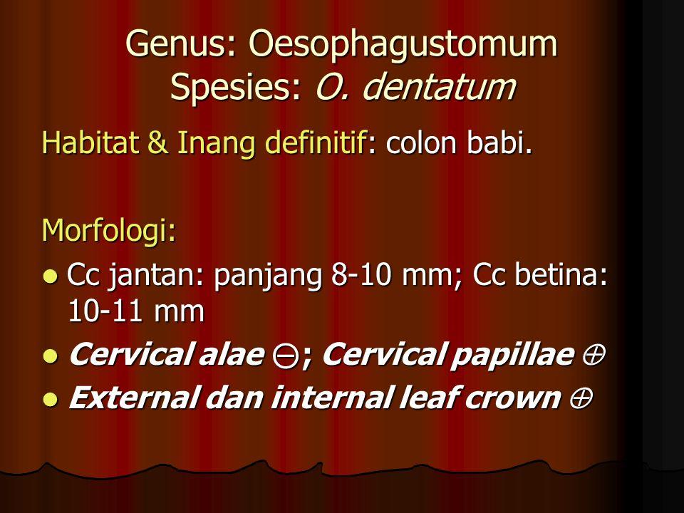 Genus: Oesophagustomum Spesies: O.dentatum Habitat & Inang definitif: colon babi.