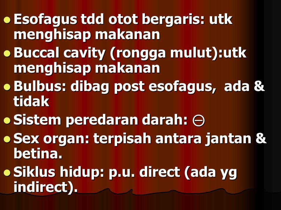 Esofagus tdd otot bergaris: utk menghisap makanan Esofagus tdd otot bergaris: utk menghisap makanan Buccal cavity (rongga mulut):utk menghisap makanan Buccal cavity (rongga mulut):utk menghisap makanan Bulbus: dibag post esofagus, ada & tidak Bulbus: dibag post esofagus, ada & tidak Sistem peredaran darah: ⊝ Sistem peredaran darah: ⊝ Sex organ: terpisah antara jantan & betina.
