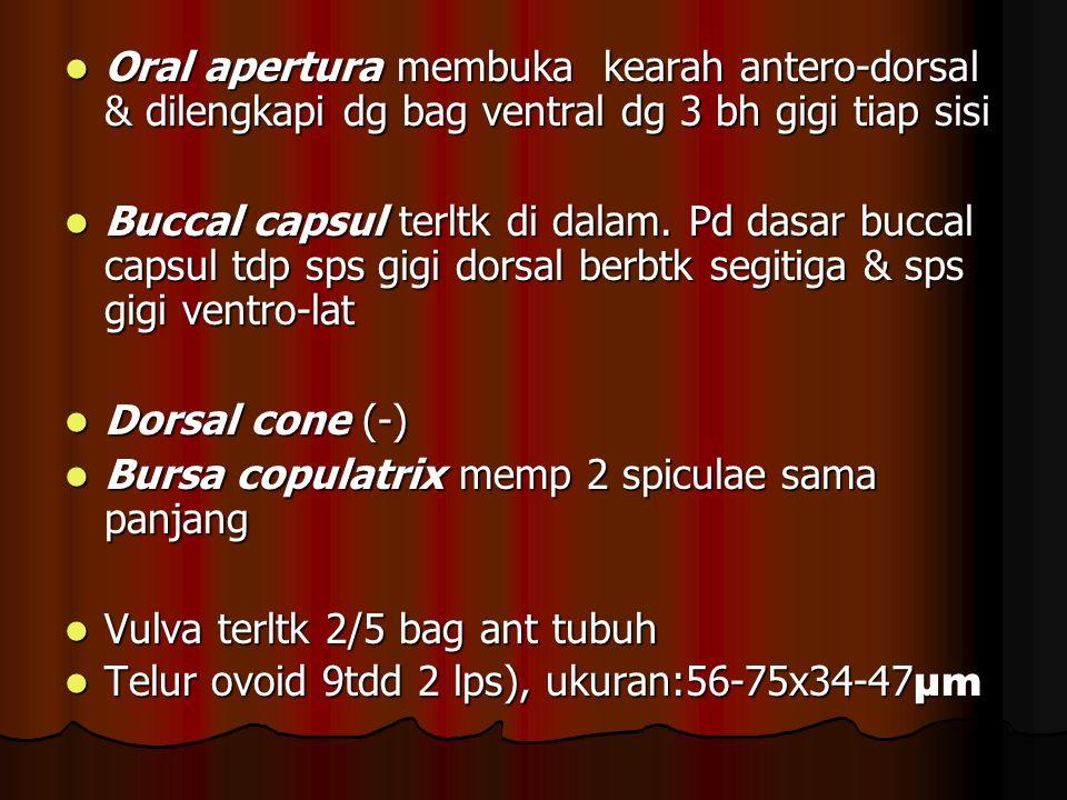 Oral apertura membuka kearah antero-dorsal & dilengkapi dg bag ventral dg 3 bh gigi tiap sisi Oral apertura membuka kearah antero-dorsal & dilengkapi dg bag ventral dg 3 bh gigi tiap sisi Buccal capsul terltk di dalam.
