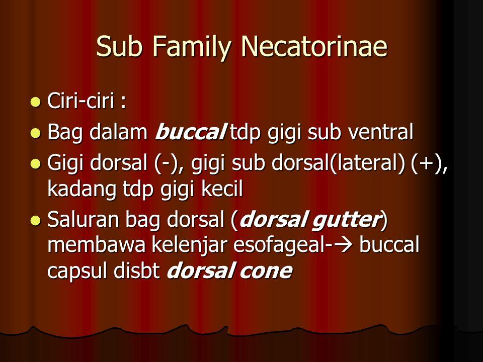 Sub Family Necatorinae Ciri-ciri : Ciri-ciri : Bag dalam buccal tdp gigi sub ventral Bag dalam buccal tdp gigi sub ventral Gigi dorsal (-), gigi sub dorsal(lateral) (+), kadang tdp gigi kecil Gigi dorsal (-), gigi sub dorsal(lateral) (+), kadang tdp gigi kecil Saluran bag dorsal (dorsal gutter) membawa kelenjar esofageal-  buccal capsul disbt dorsal cone Saluran bag dorsal (dorsal gutter) membawa kelenjar esofageal-  buccal capsul disbt dorsal cone