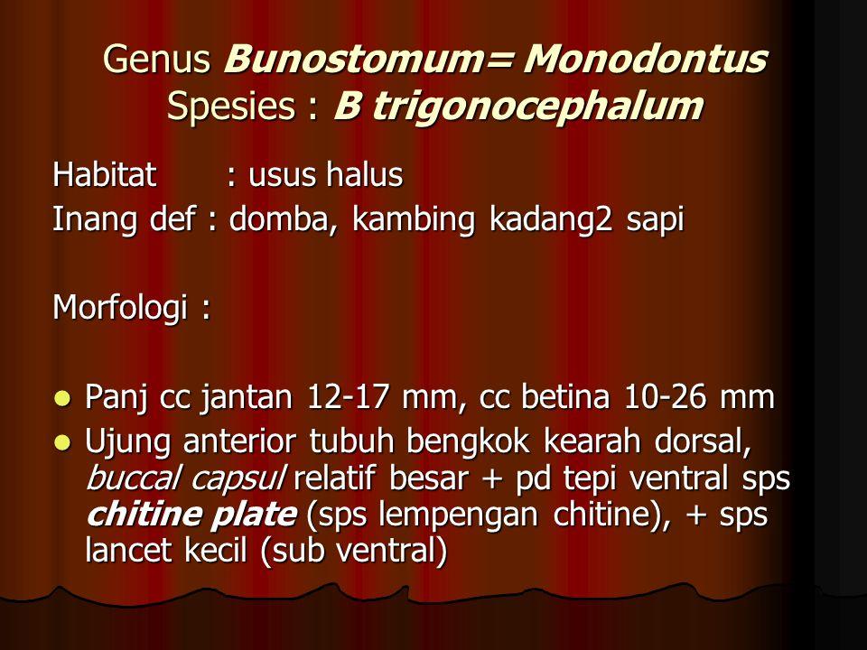 Genus Bunostomum= Monodontus Spesies : B trigonocephalum Habitat: usus halus Inang def : domba, kambing kadang2 sapi Morfologi : Panj cc jantan 12-17 mm, cc betina 10-26 mm Panj cc jantan 12-17 mm, cc betina 10-26 mm Ujung anterior tubuh bengkok kearah dorsal, buccal capsul relatif besar + pd tepi ventral sps chitine plate (sps lempengan chitine), + sps lancet kecil (sub ventral) Ujung anterior tubuh bengkok kearah dorsal, buccal capsul relatif besar + pd tepi ventral sps chitine plate (sps lempengan chitine), + sps lancet kecil (sub ventral)