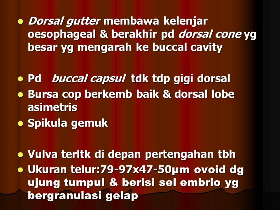 Dorsal gutter membawa kelenjar oesophageal & berakhir pd dorsal cone yg besar yg mengarah ke buccal cavity Dorsal gutter membawa kelenjar oesophageal & berakhir pd dorsal cone yg besar yg mengarah ke buccal cavity Pd buccal capsul tdk tdp gigi dorsal Pd buccal capsul tdk tdp gigi dorsal Bursa cop berkemb baik & dorsal lobe asimetris Bursa cop berkemb baik & dorsal lobe asimetris Spikula gemuk Spikula gemuk Vulva terltk di depan pertengahan tbh Vulva terltk di depan pertengahan tbh Ukuran telur:79-97x47-50 µm ovoid dg ujung tumpul & berisi sel embrio yg bergranulasi gelap Ukuran telur:79-97x47-50 µm ovoid dg ujung tumpul & berisi sel embrio yg bergranulasi gelap
