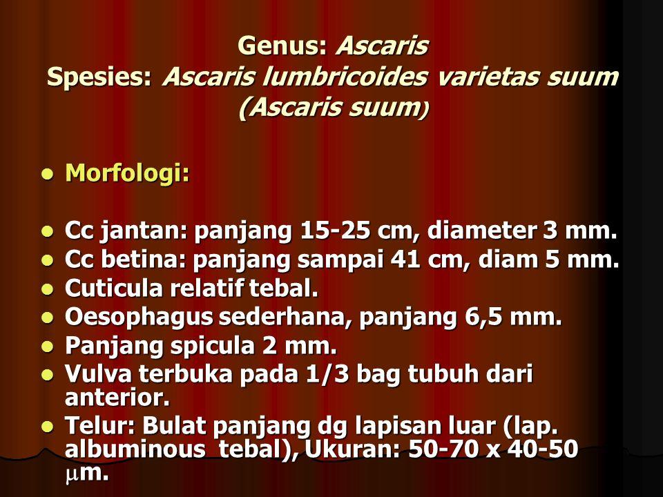 Genus: Ascaris Spesies: Ascaris lumbricoides varietas suum (Ascaris suum ) Morfologi: Morfologi: Cc jantan: panjang 15-25 cm, diameter 3 mm.