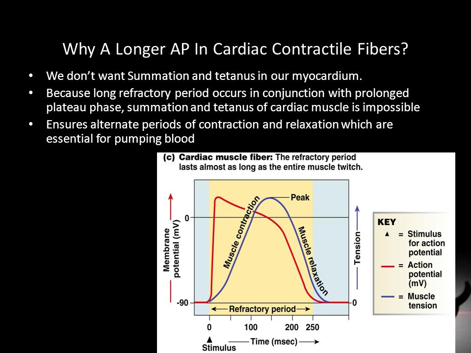 Why A Longer AP In Cardiac Contractile Fibers? We don't want Summation and tetanus in our myocardium. Because long refractory period occurs in conjunc