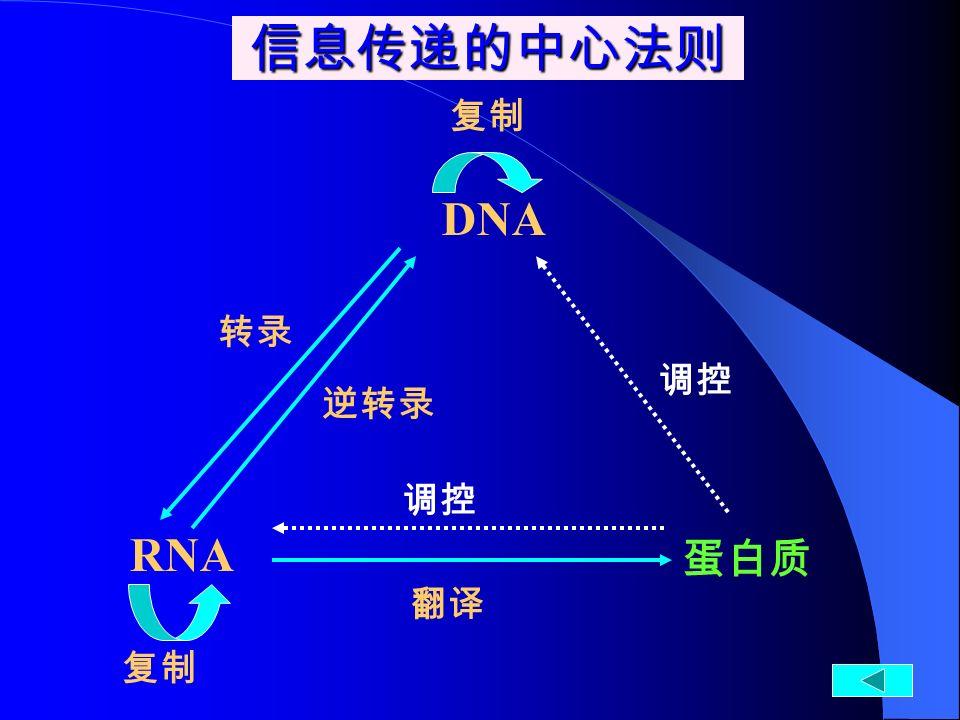 蛋白质 翻译 转录 逆转录 复制 DNA RNA 信息传递的中心法则 调控