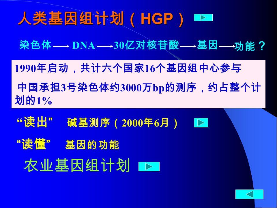 1990 年启动,共计六个国家 16 个基因组中心参与 中国承担 3 号染色体约 3000 万 bp 的测序,约占整个计 划的 1% 染色体 DNA 30 亿对核苷酸基因 功能 ? 人类基因组计划( HGP ) 读出 碱基测序( 2000 年 6 月) 读懂 基因的功能 农业基因组计划