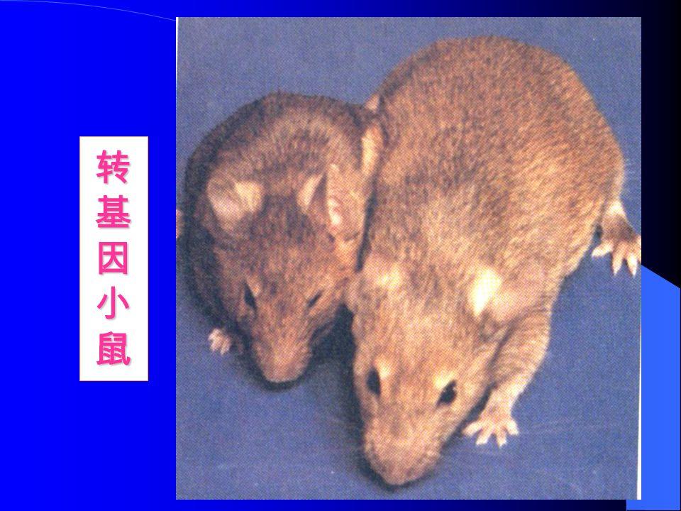 转基因小鼠转基因小鼠转基因小鼠转基因小鼠