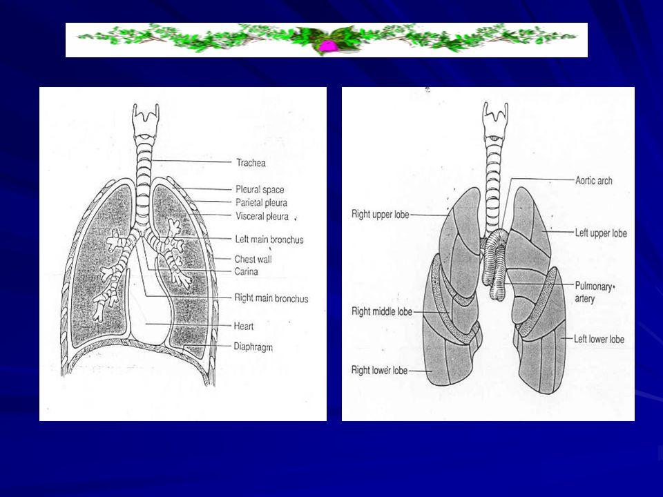 Postural drainage position (PD) Posisi dengan meluruskan segmen bronchi dengan gravitasi, jadi sekresi diakumulasi pada segmen bronchopulmonari bergerak ke arah central dan dikeluarkan dengan batuk, dan dengan mudah meludah