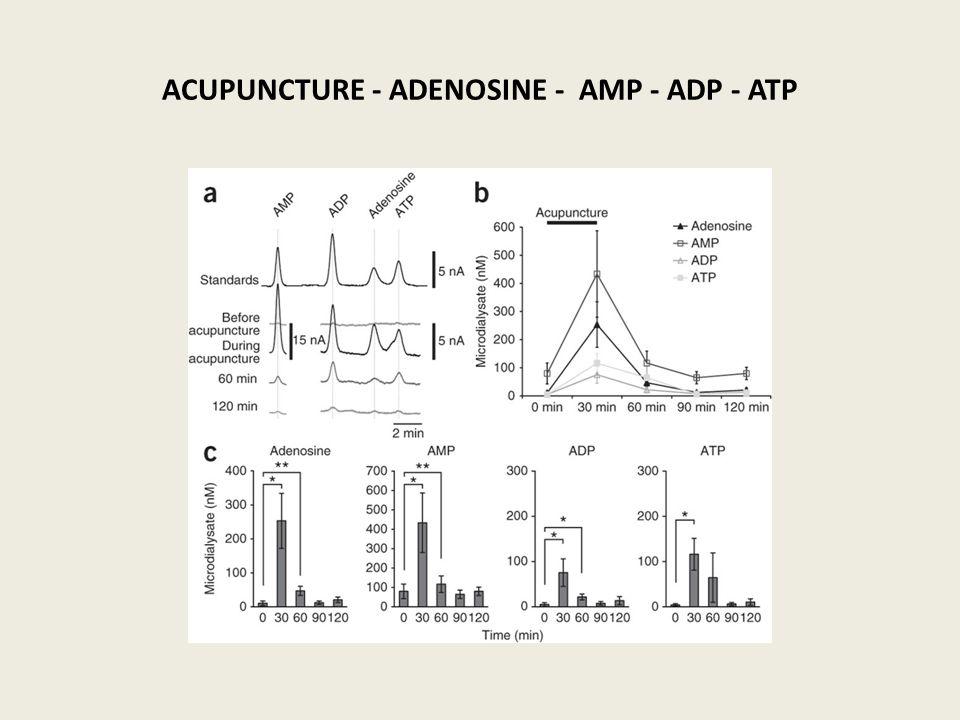 ACUPUNCTURE - ADENOSINE - AMP - ADP - ATP