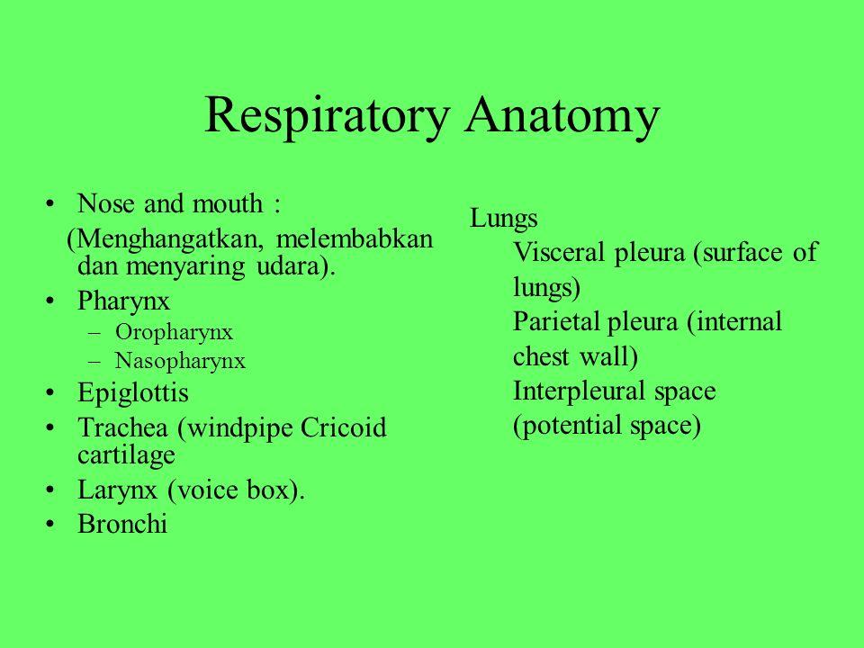Respiratory Anatomy Nose and mouth : (Menghangatkan, melembabkan dan menyaring udara). Pharynx –Oropharynx –Nasopharynx Epiglottis Trachea (windpipe C