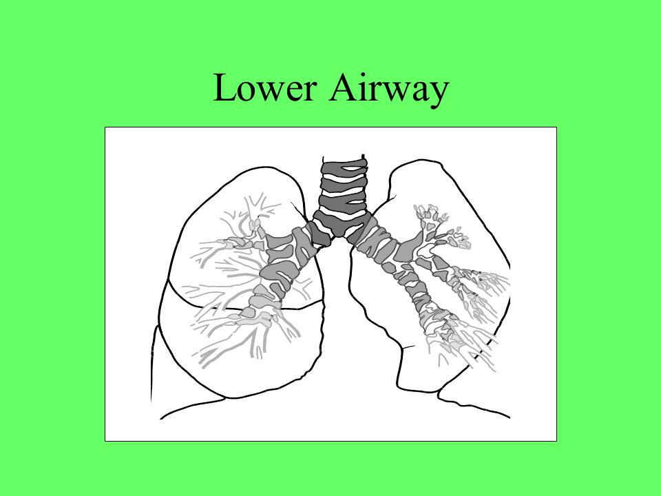 Lower Airway