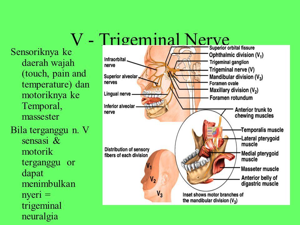 V - Trigeminal Nerve Sensoriknya ke daerah wajah (touch, pain and temperature) dan motoriknya ke Temporal, massester Bila terganggu n.