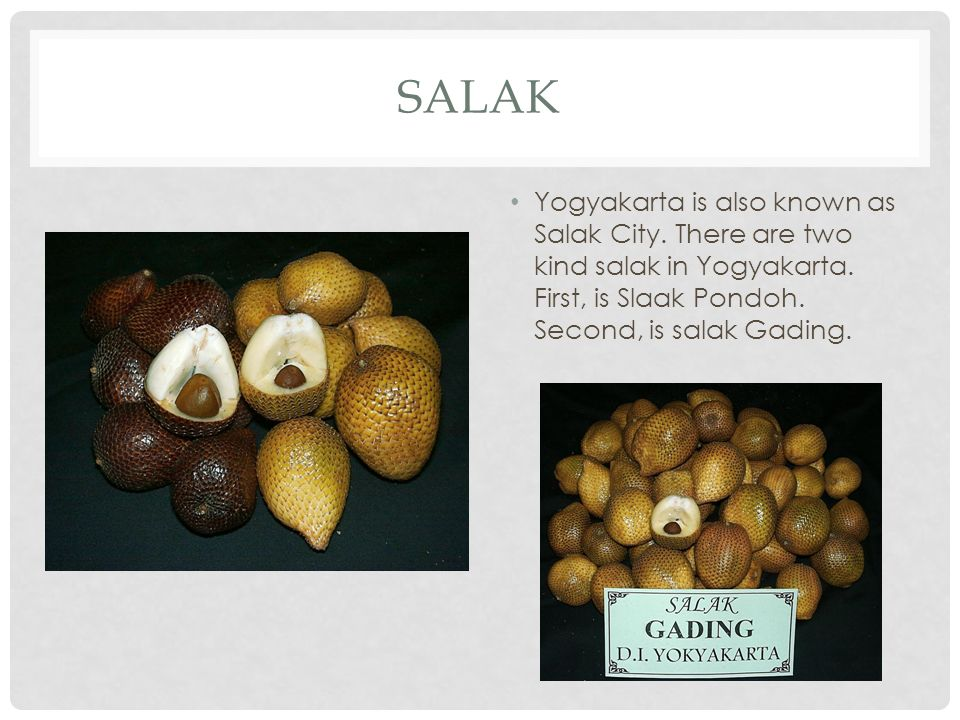 SALAK Yogyakarta is also known as Salak City. There are two kind salak in Yogyakarta. First, is Slaak Pondoh. Second, is salak Gading.
