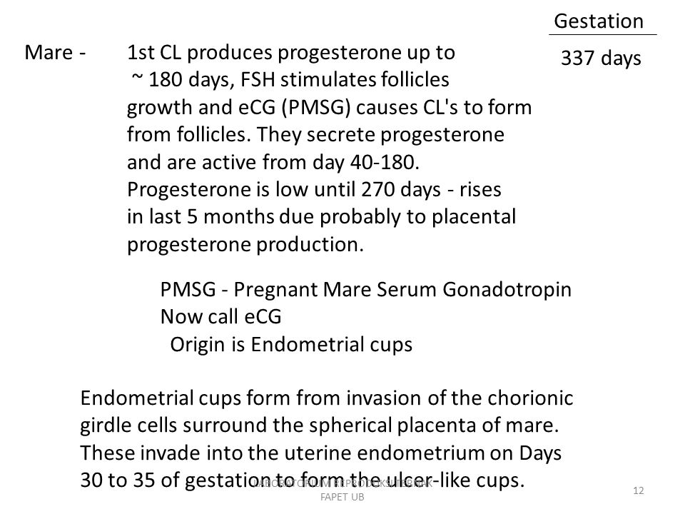 1st CL produces progesterone up to ~ 180 days, FSH stimulates follicles growth and eCG (PMSG) causes CL s to form from follicles.