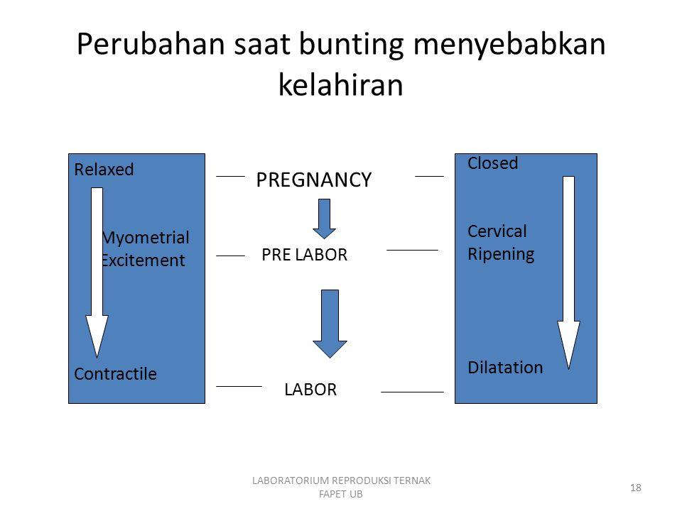 LABORATORIUM REPRODUKSI TERNAK FAPET UB 18 Perubahan saat bunting menyebabkan kelahiran Relaxed Myometrial Excitement Contractile Closed Cervical Ripe