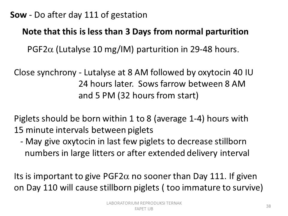 Sow - Do after day 111 of gestation PGF2  (Lutalyse 10 mg/IM) parturition in 29-48 hours.
