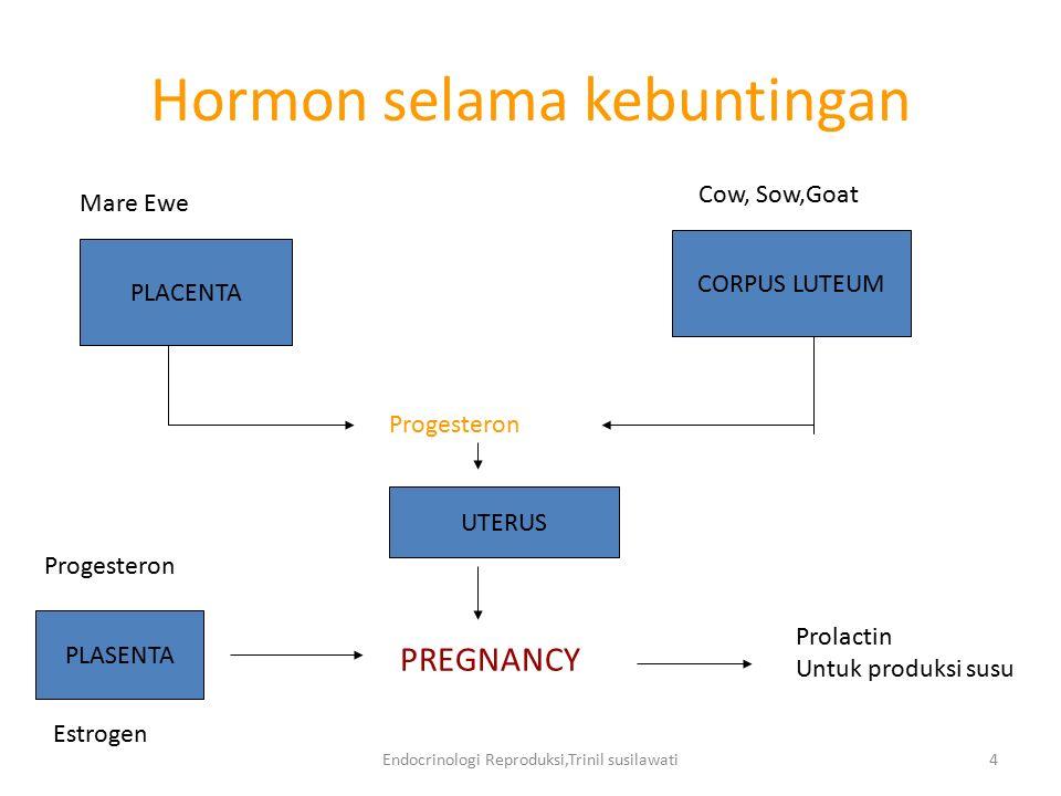 Endocrinologi Reproduksi,Trinil susilawati4 Hormon selama kebuntingan PLACENTA CORPUS LUTEUM Mare Ewe Cow, Sow,Goat Progesteron UTERUS PREGNANCY PLASE
