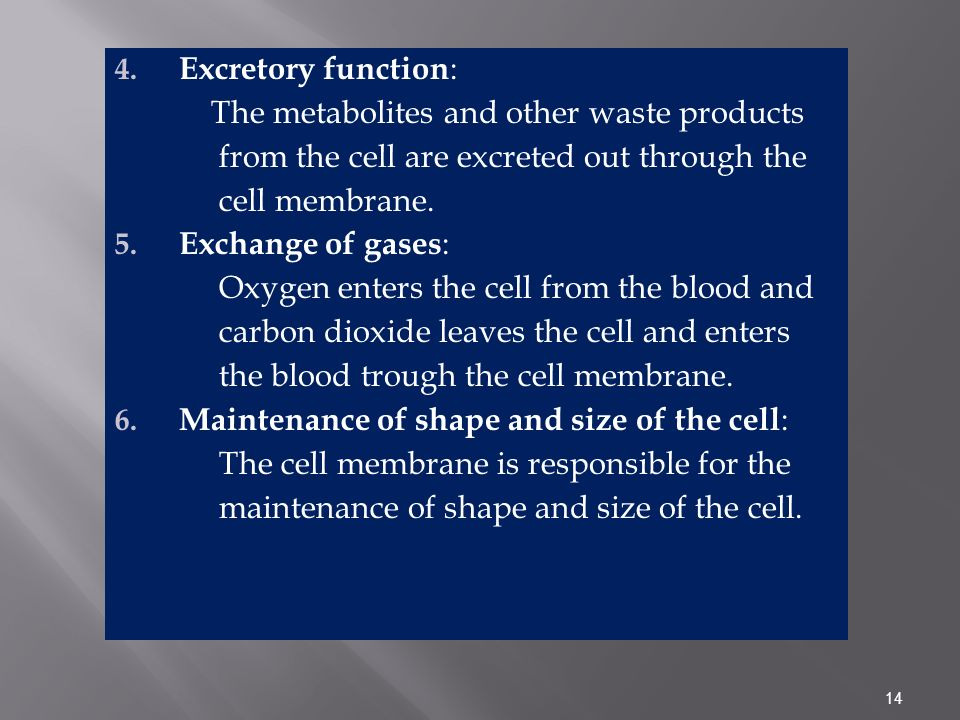 14 4. Excretory function : The metabolites and other waste products from the cell are excreted out through the cell membrane. 5. Exchange of gases : O