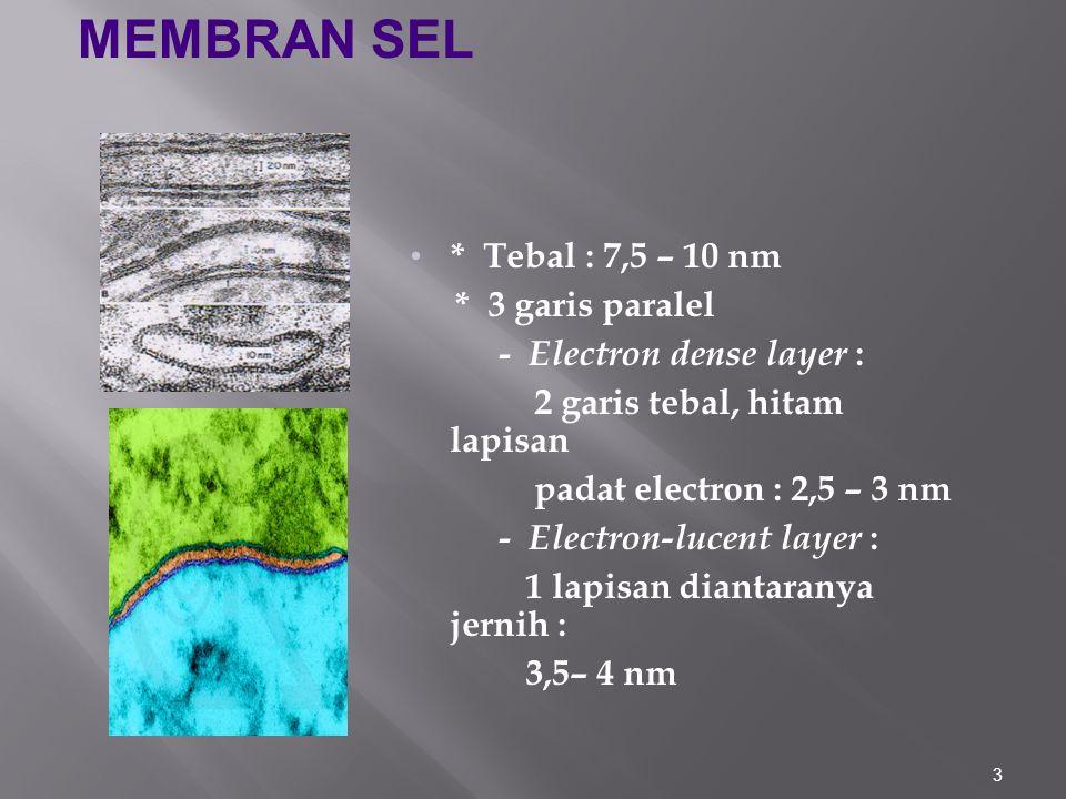 3 * Tebal : 7,5 – 10 nm * 3 garis paralel - Electron dense layer : 2 garis tebal, hitam lapisan padat electron : 2,5 – 3 nm - Electron-lucent layer : 1 lapisan diantaranya jernih : 3,5– 4 nm MEMBRAN SEL