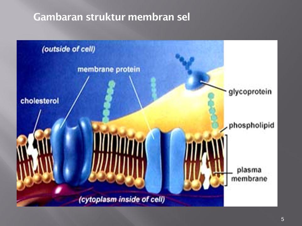 5 Gambaran struktur membran sel