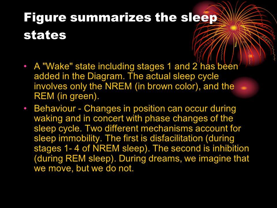 Figure summarizes the sleep states A