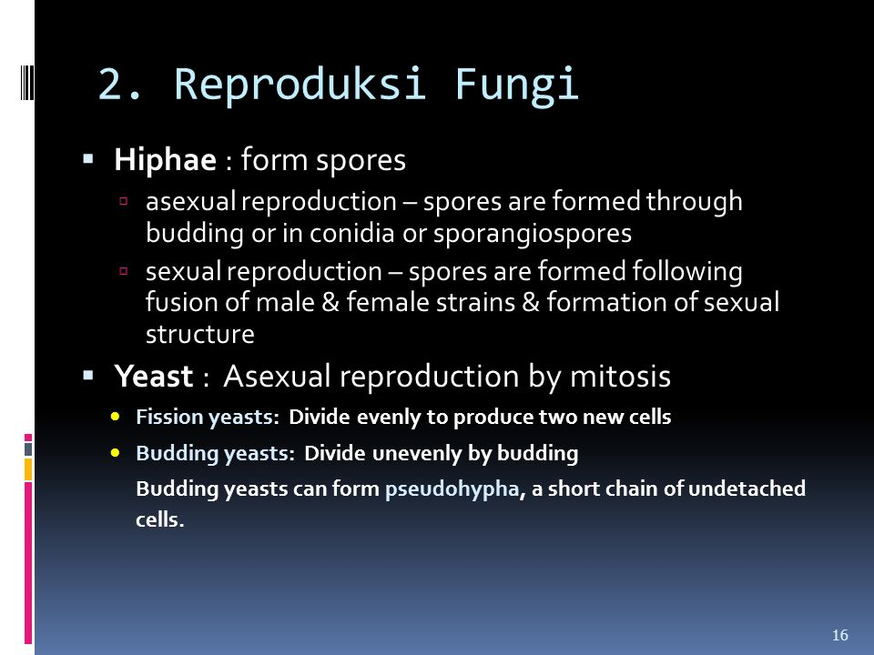 2. Reproduksi Fungi  Hiphae : form spores  asexual reproduction – spores are formed through budding or in conidia or sporangiospores  sexual reprod