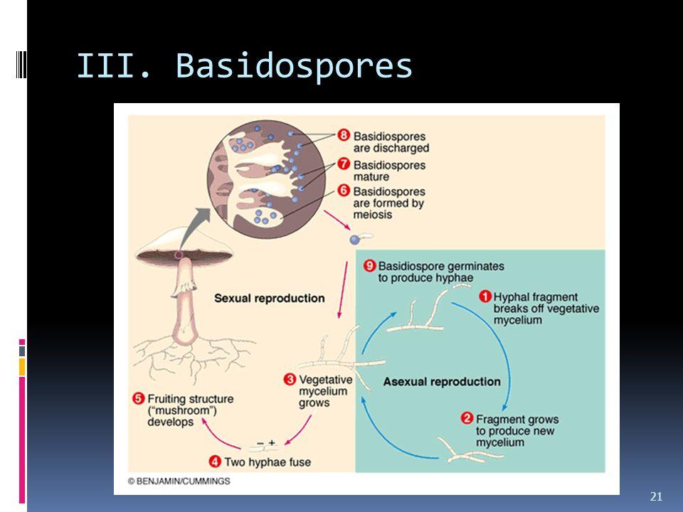 III. Basidospores 21