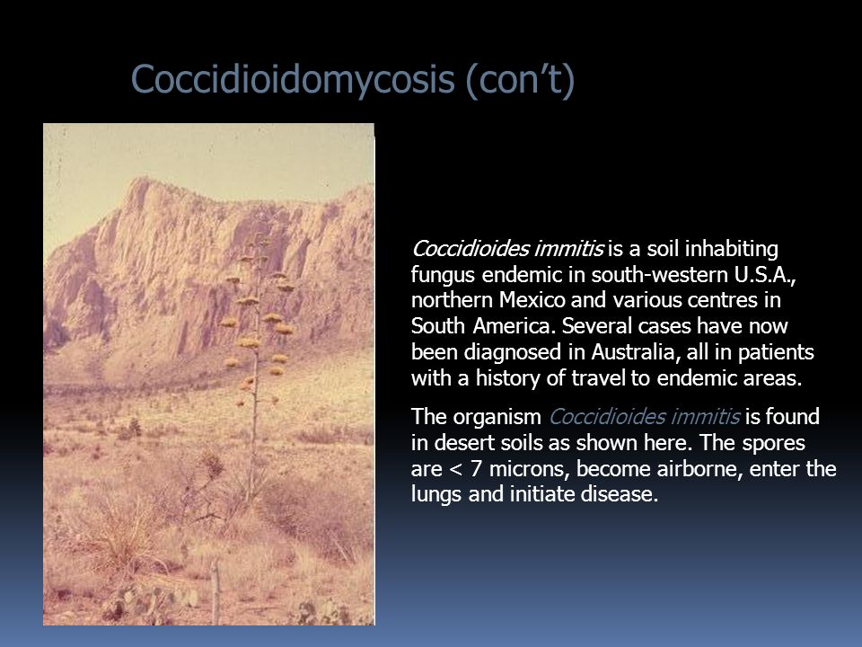 Coccidioides immitis is a soil inhabiting fungus endemic in south-western U.S.A., northern Mexico and various centres in South America.