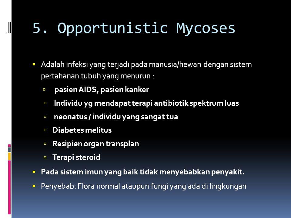 5. Opportunistic Mycoses  Adalah infeksi yang terjadi pada manusia/hewan dengan sistem pertahanan tubuh yang menurun :  pasien AIDS, pasien kanker 