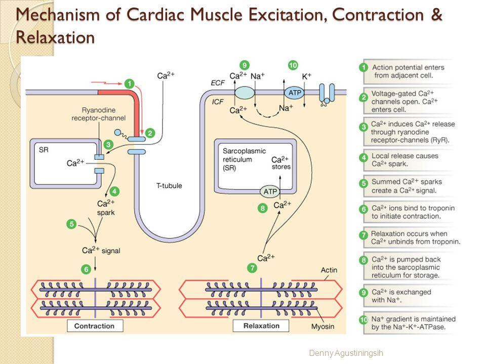 Action Potential Skeletal Cardiac