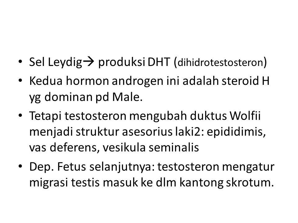 Sel Leydig  produksi DHT ( dihidrotestosteron ) Kedua hormon androgen ini adalah steroid H yg dominan pd Male.