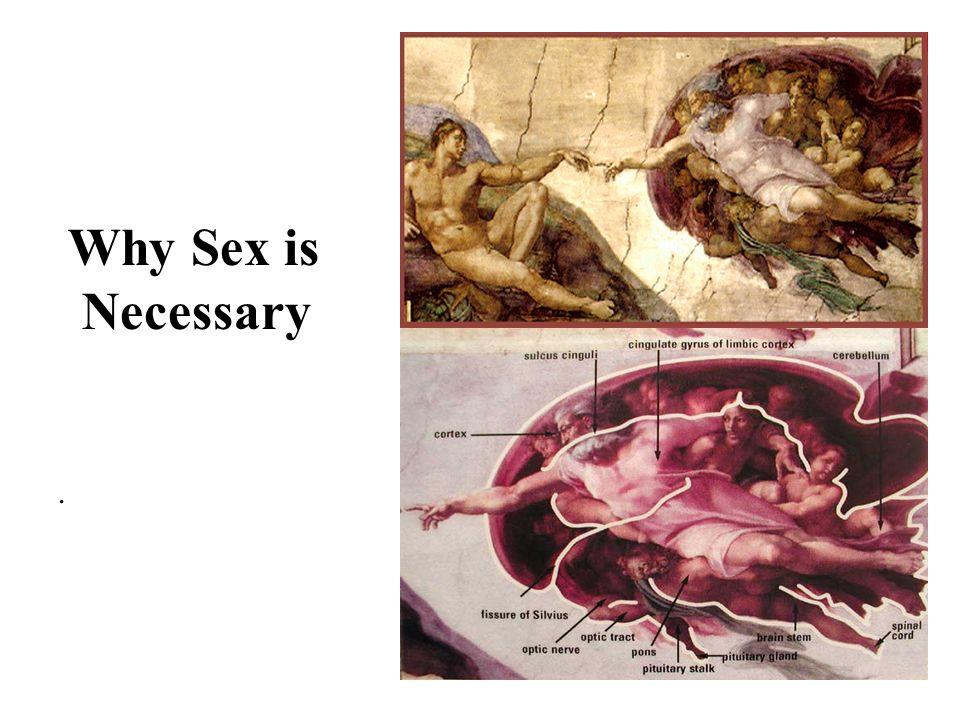 Why is Sex Necessary.Mengapa sex diperlukan .