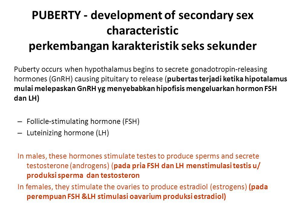 PUBERTY - development of secondary sex characteristic perkembangan karakteristik seks sekunder Puberty occurs when hypothalamus begins to secrete gonadotropin-releasing hormones (GnRH) causing pituitary to release (pubertas terjadi ketika hipotalamus mulai melepaskan GnRH yg menyebabkan hipofisis mengeluarkan hormon FSH dan LH) – Follicle-stimulating hormone (FSH) – Luteinizing hormone (LH) In males, these hormones stimulate testes to produce sperms and secrete testosterone (androgens) (pada pria FSH dan LH menstimulasi testis u/ produksi sperma dan testosteron In females, they stimulate the ovaries to produce estradiol (estrogens) (pada perempuan FSH &LH stimulasi oavarium produksi estradiol)