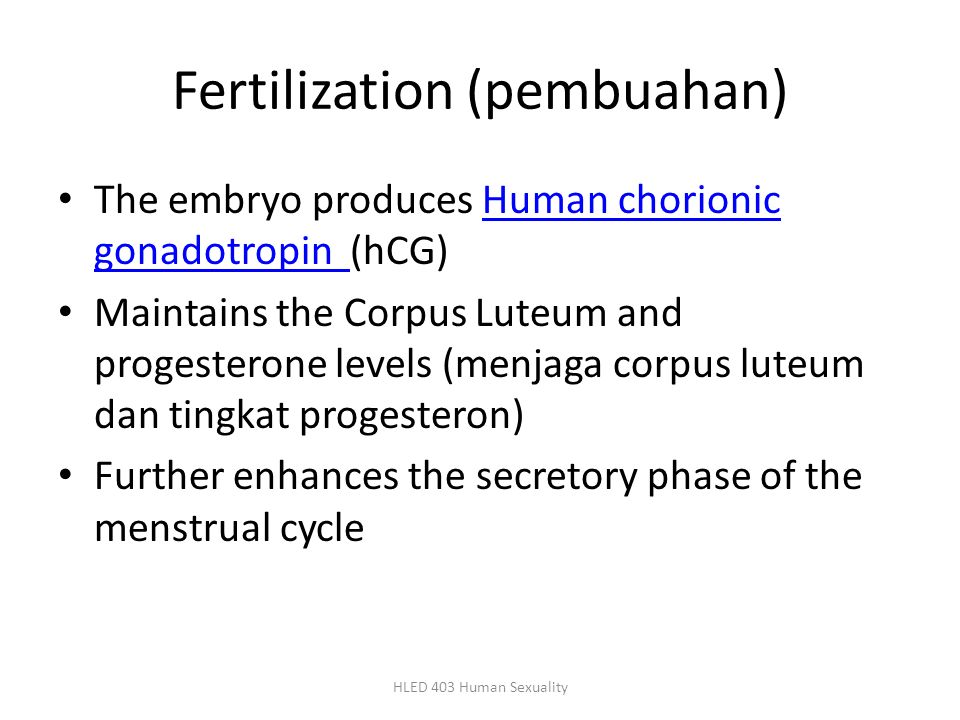 Fertilization (pembuahan) The embryo produces Human chorionic gonadotropin (hCG)Human chorionic gonadotropin Maintains the Corpus Luteum and progester