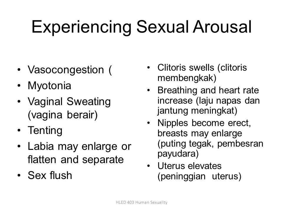 Experiencing Sexual Arousal Vasocongestion ( Myotonia Vaginal Sweating (vagina berair) Tenting Labia may enlarge or flatten and separate Sex flush Clitoris swells (clitoris membengkak) Breathing and heart rate increase (laju napas dan jantung meningkat) Nipples become erect, breasts may enlarge (puting tegak, pembesran payudara) Uterus elevates (peninggian uterus) HLED 403 Human Sexuality
