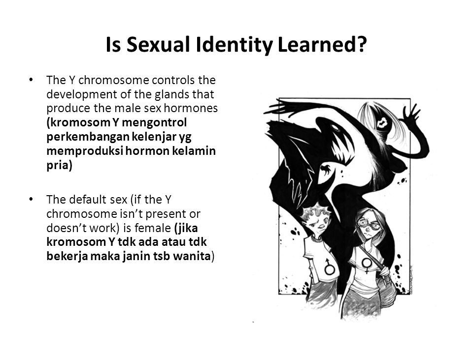 Sexual Development External sex organs – Penis and scrotum in males – Labia, clitoris, and outer vagina in females – Female development is the default Nature's impulse is to create a female – Male development requires androgens