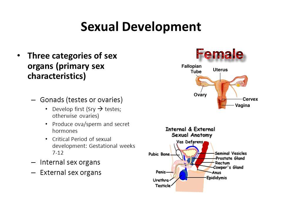 HypothalamusHypothalamus OVARIES TESTES Anterior Pituitary FSH- RF LH- RF FSH LHICSH*(LH) Ovulation Corpus Luteum Progesterone Ovum Growth Estrogen (estradiol) Testosterone Spermatogenesis Hormonal Changes in Puberty * Interstitial-cell stimulating hormone