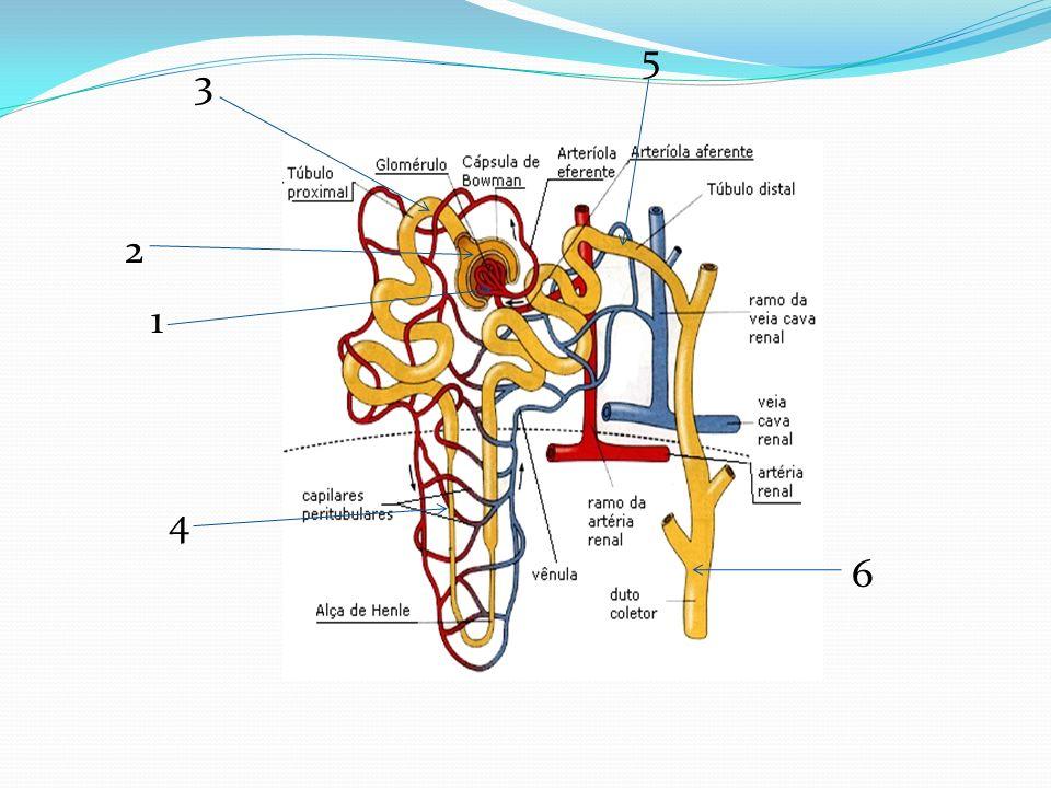 ESO Hiperlipidemia Kelebihan lemak (jahat) dalam darah Peningkatan kadar kolesterol total dlm darah (LDL, VLDL) dan trigliserida Penurunan kadar HDL Risiko besar pada Klortalidon Pengecualian : Indapamida