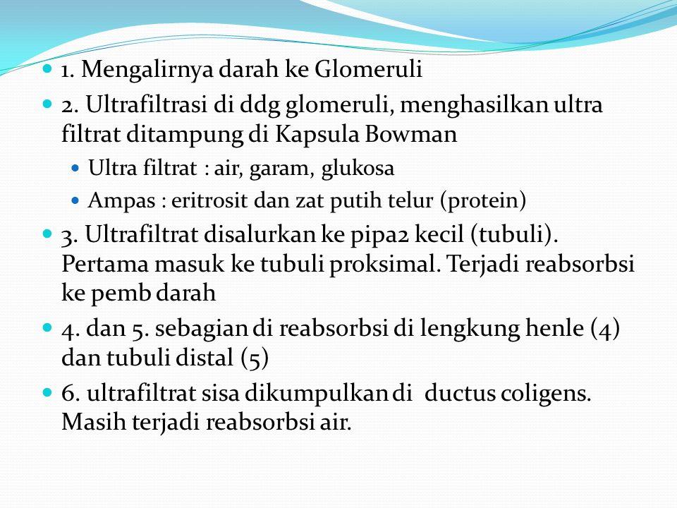 1.Mengalirnya darah ke Glomeruli 2.