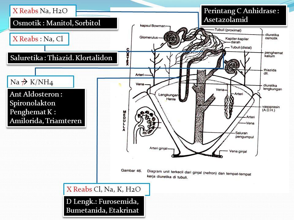 Osmotik dan Perintang C Anhidrase Osmotik dan Perintang C Anhidrase Kuat / Lengkungan Sedang / Thiazid/ Saluretika Lemah / Hemat K