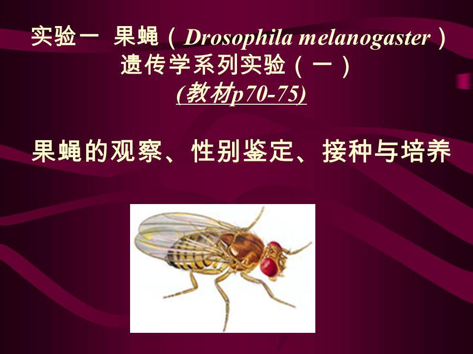实验一 果蝇( Drosophila melanogaster ) 遗传学系列实验(一) ( 教材 p70-75) 果蝇的观察、性别鉴定、接种与培养