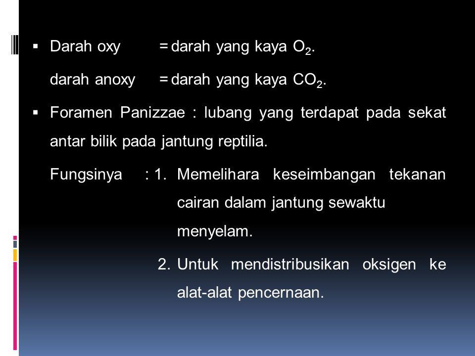  Darah oxy=darah yang kaya O 2. darah anoxy=darah yang kaya CO 2.  Foramen Panizzae : lubang yang terdapat pada sekat antar bilik pada jantung repti