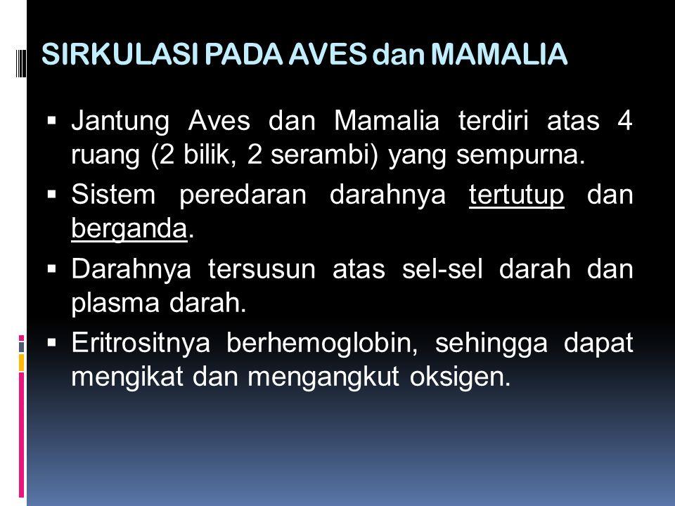 SIRKULASI PADA AVES dan MAMALIA  Jantung Aves dan Mamalia terdiri atas 4 ruang (2 bilik, 2 serambi) yang sempurna.  Sistem peredaran darahnya tertut
