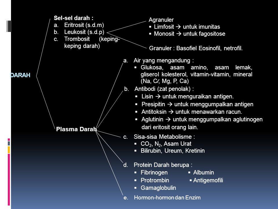 DARAH Sel-sel darah : a.Eritrosit (s.d.m) b.Leukosit (s.d.p) c.Trombosit (keping- keping darah) Plasma Darah Agranuler  Limfosit  untuk imunitas  M