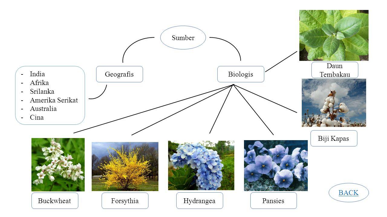 Sumber GeografisBiologis -India -Afrika -Srilanka -Amerika Serikat -Australia -Cina BuckwheatForsythia HydrangeaPansies Biji Kapas Daun Tembakau BACK