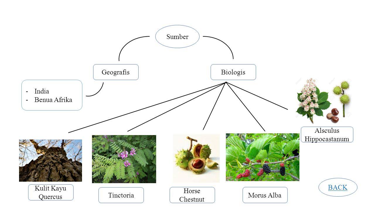 Sumber GeografisBiologis -India -Benua Afrika Kulit Kayu Quercus Tinctoria Horse Chestnut Morus Alba Alsculus Hippocastanum BACK
