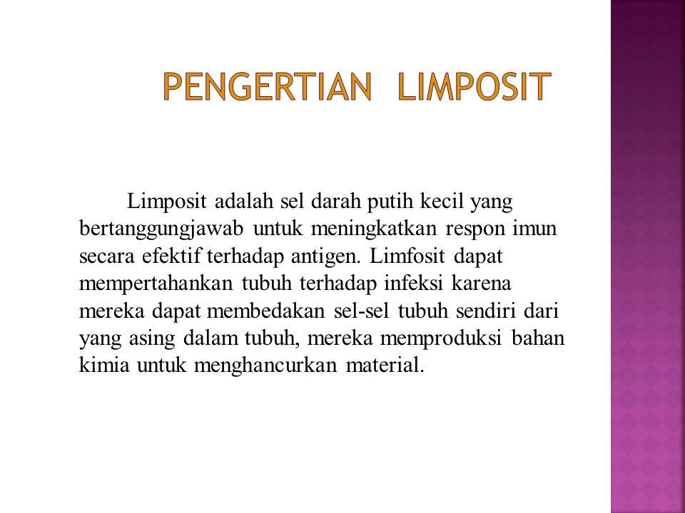 Limposit adalah sel darah putih kecil yang bertanggungjawab untuk meningkatkan respon imun secara efektif terhadap antigen. Limfosit dapat mempertahan