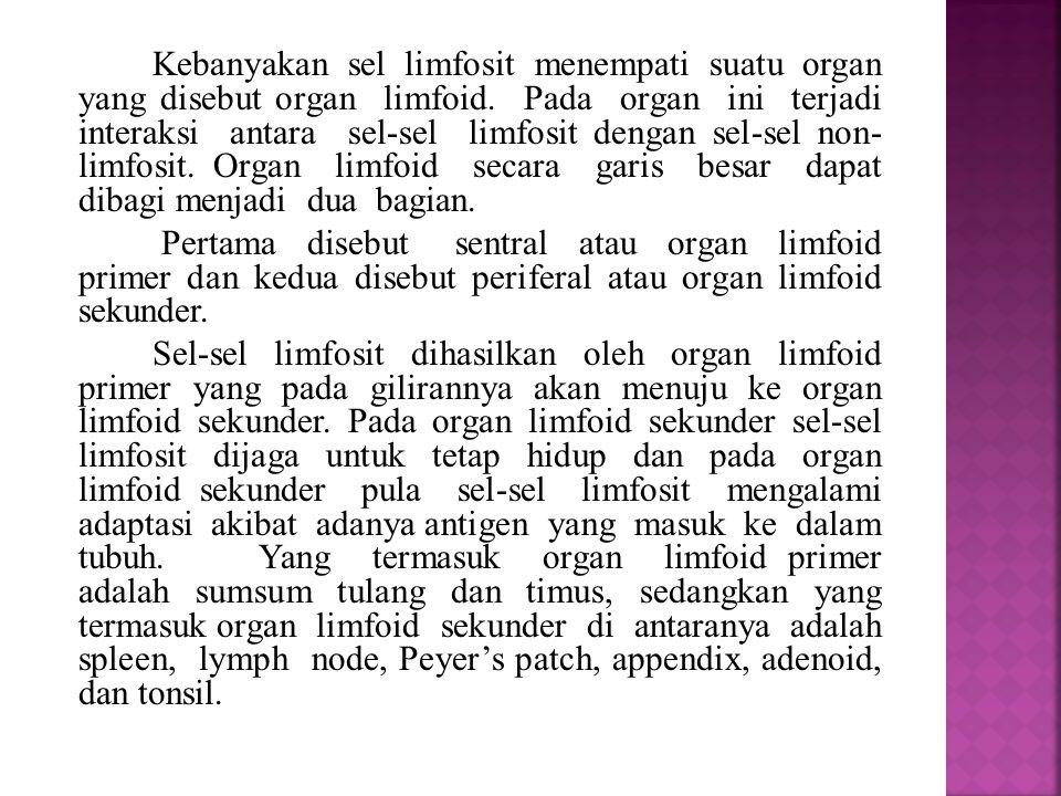  Organ limfoid primer Terdiri dari sumsum tulang dan tymus.