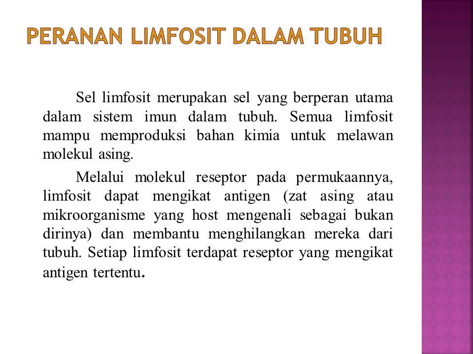 Limfosit adalah leukosit yang berbeda dengan sel-sel darah putih lainnya.Ada dua jenis limfosit yang diproduksi di sumsum tulang sebelum kelahiran.