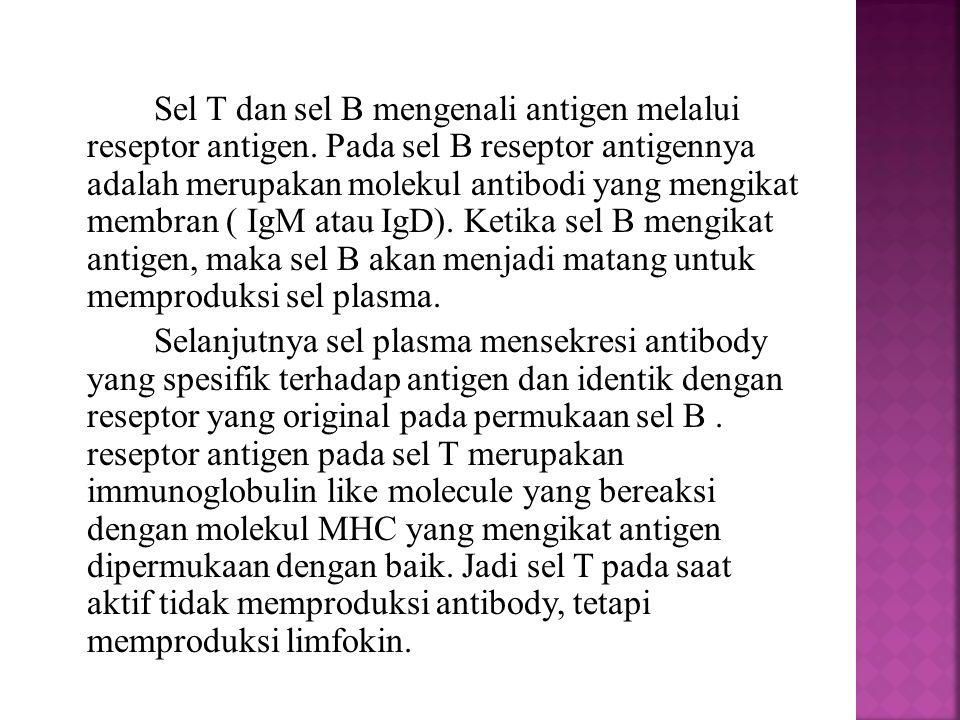 Sel T dan sel B mengenali antigen melalui reseptor antigen. Pada sel B reseptor antigennya adalah merupakan molekul antibodi yang mengikat membran ( I